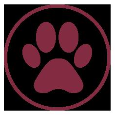 Iconos web queralt veterinaria